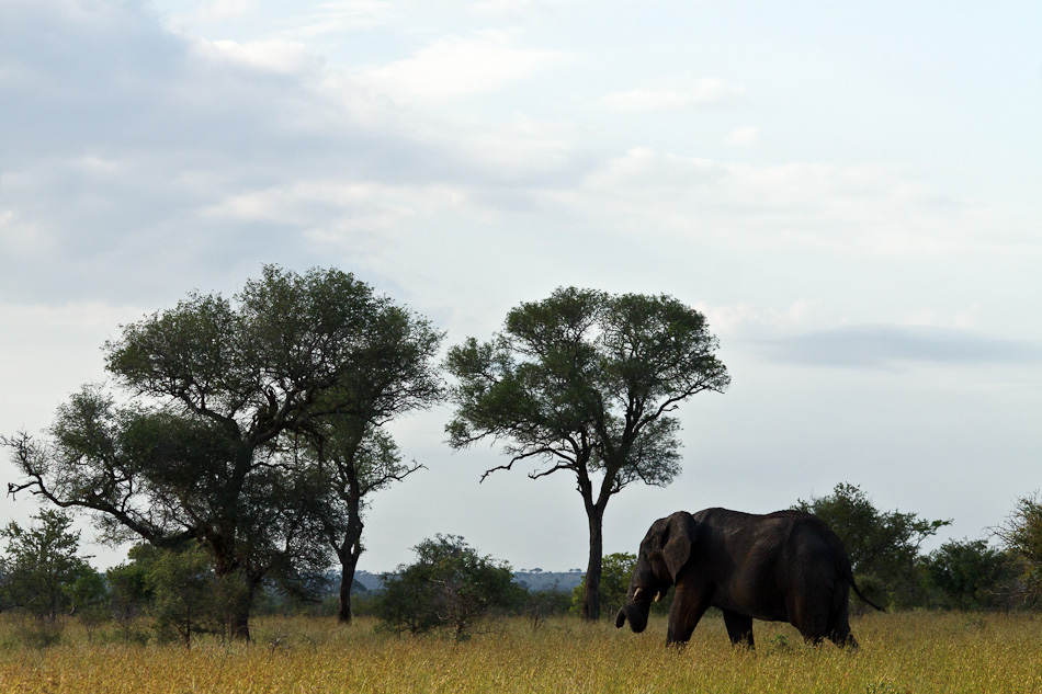 Olifant |Krugerpark, Tamboti, 2012