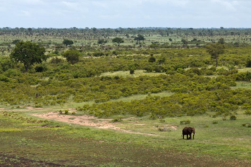 Olifant | Krugerpark, Skukuza, 2012