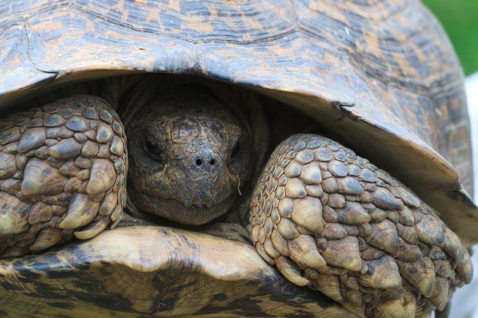 Schildpad | Schotia Safaris, 12 januari 2011