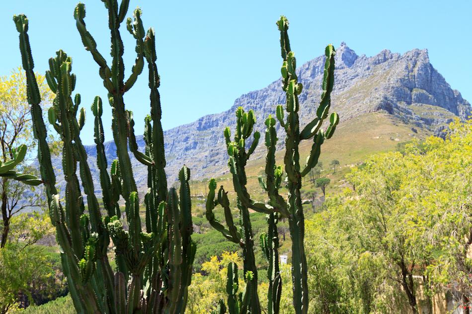 Uitzicht vanaf Tafelberg, 2 januari 2011