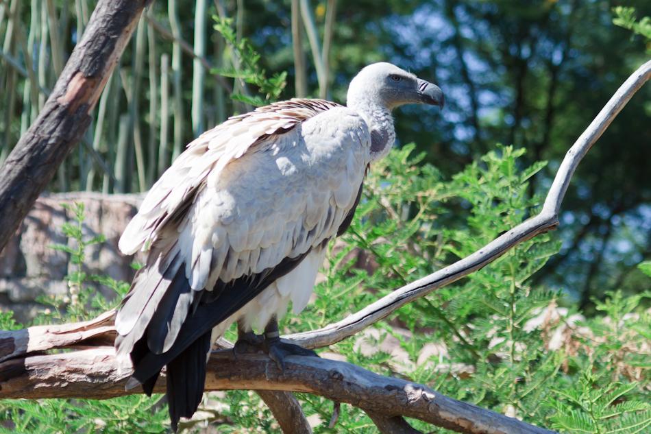 Witruggier | Cango Wildlife, 8 januari 2011