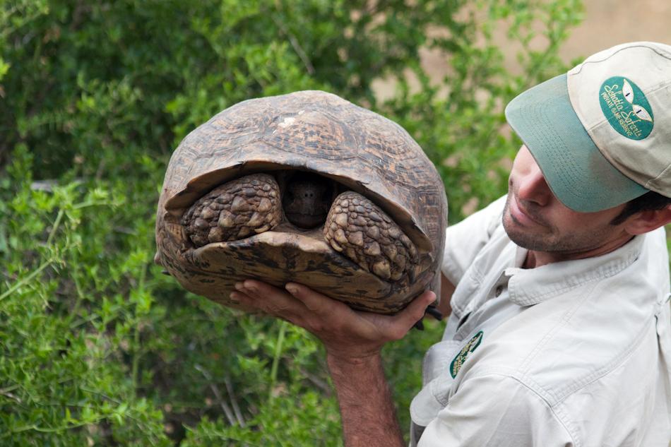 Schildpad |Schotia Safaris, 12 januari 2011