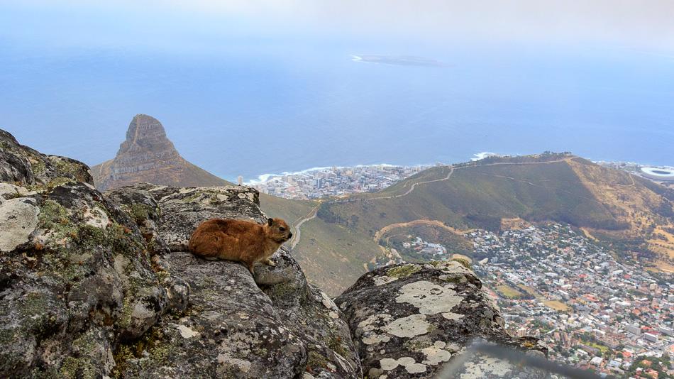 Uitzicht op Kaapstad | Tafelberg, Kaapstad, Zuid-Afrika, 3 december 2018