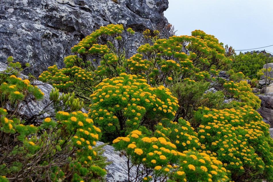 Fauna  | Tafelberg, Kaapstad, Zuid-Afrika, 3 december 2018
