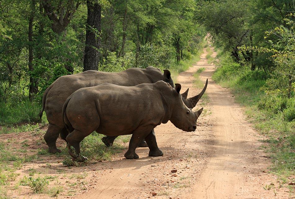 Neushoorns   Edeni Game Reserve, 3 januari 2008