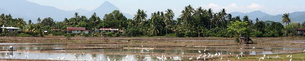Landschap | Borneo, 5 juni 2009