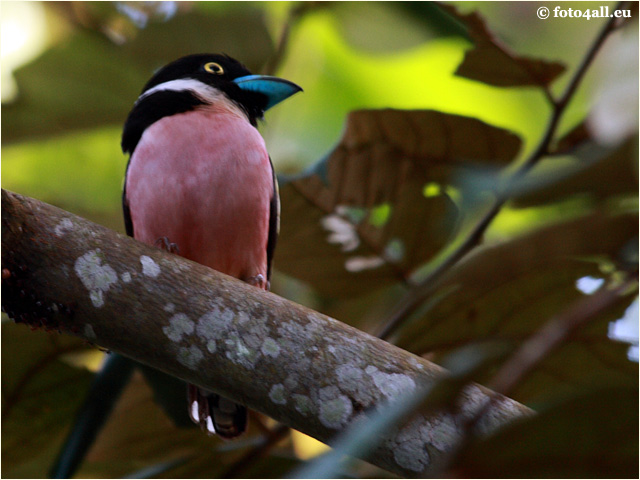 vogel11