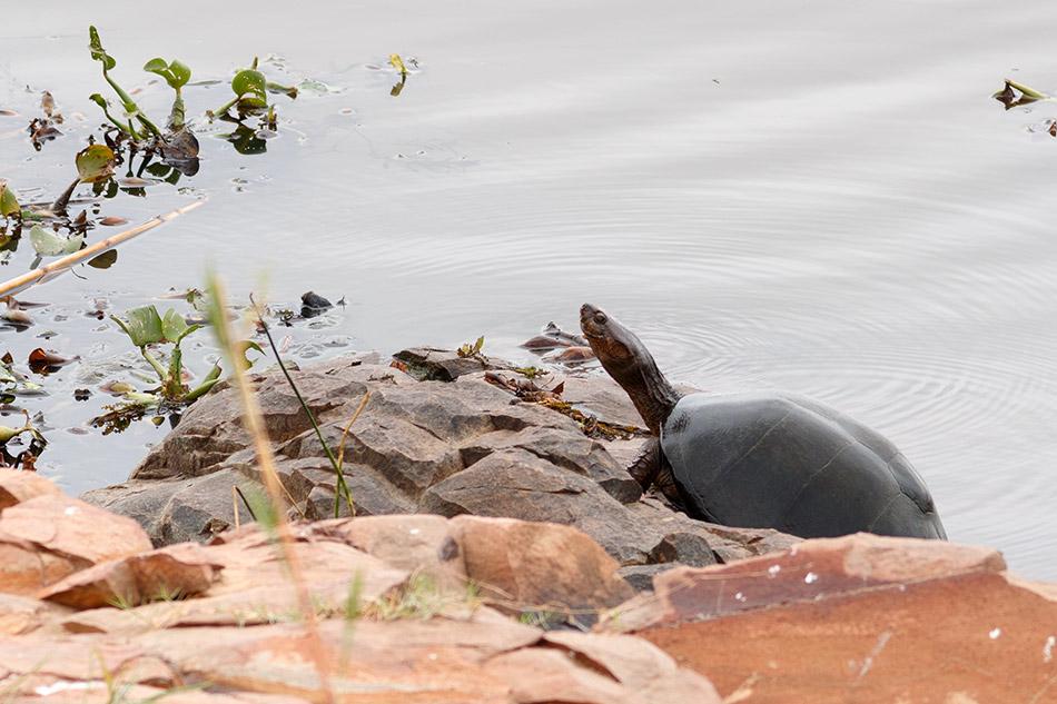 | Krugerpark, Satara restcamp – 22 november 2014