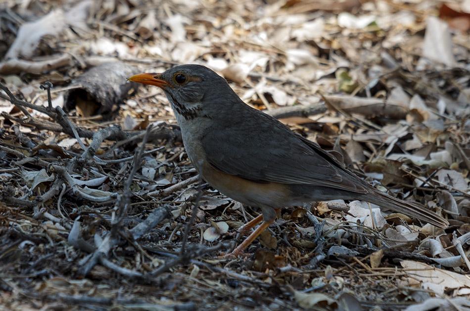 Vogel | Krugerpark, Letaba Restcamp – 23 november 2014