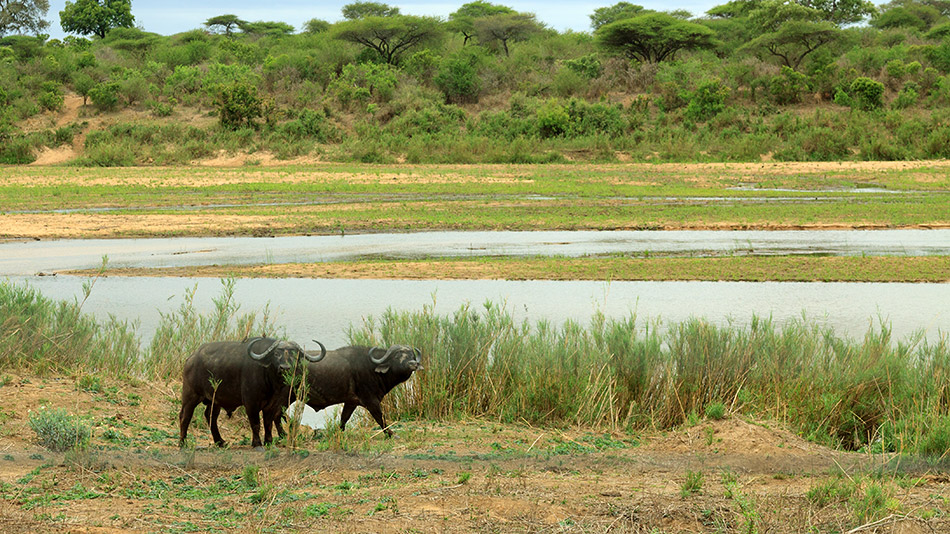 Uitzicht vanaf onze veranda | Krugerpark, Lower Sabie restcamp – 19 november 2014