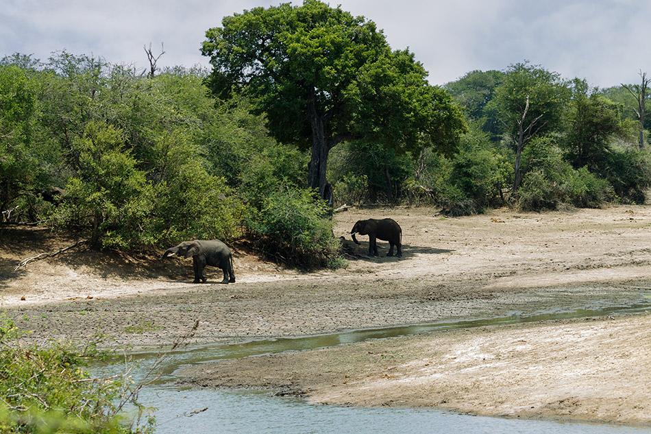 Olifanten | Krugerpark, Satara restcamp – 21 november 2014