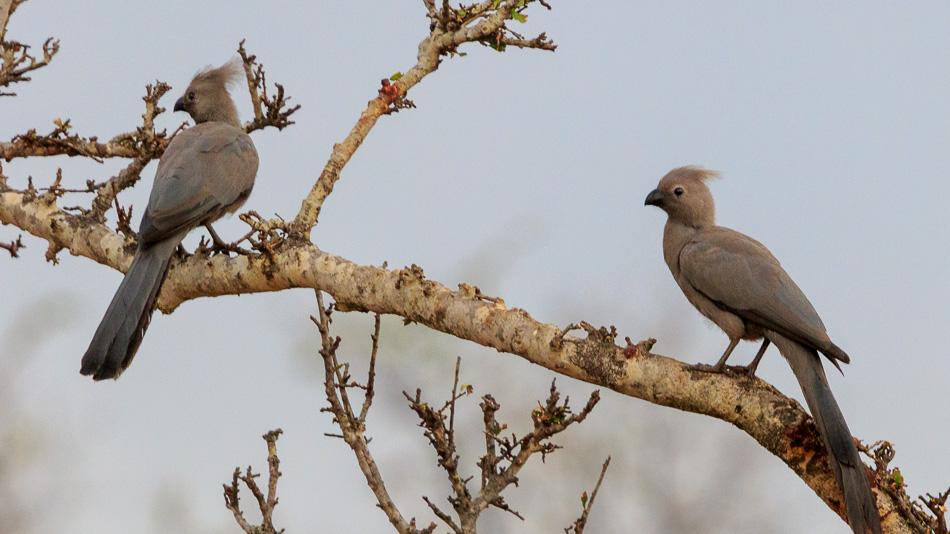Vale Toerako' s | Krugerpark, 21 december 2018