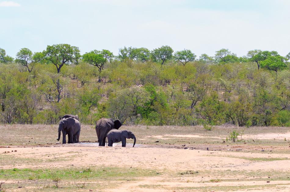 Olifanten  | Krugerpark, 22 december 2018