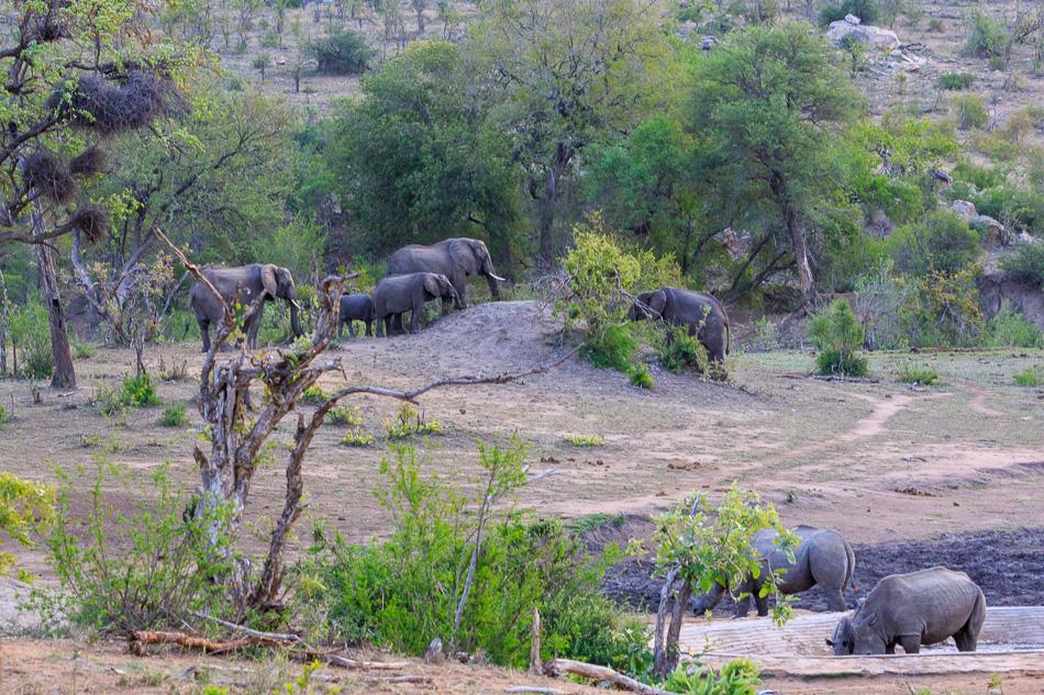Olifanten en Neushoorns bij waterput  | Krugerpark, 22 december 2018