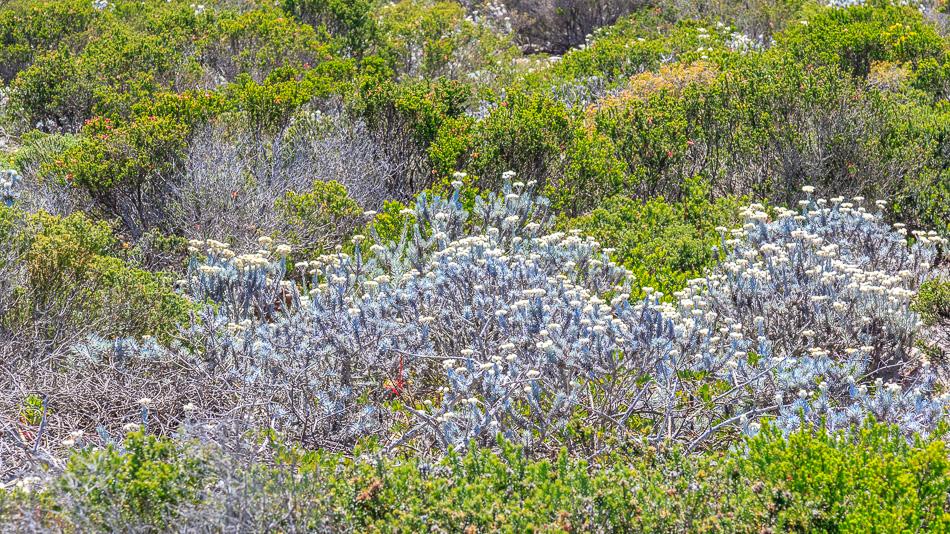 Wandelen in het Robberg Nature Reserve | Robberg Nature Reserve, Zuid-Afrika, 25 december 2018
