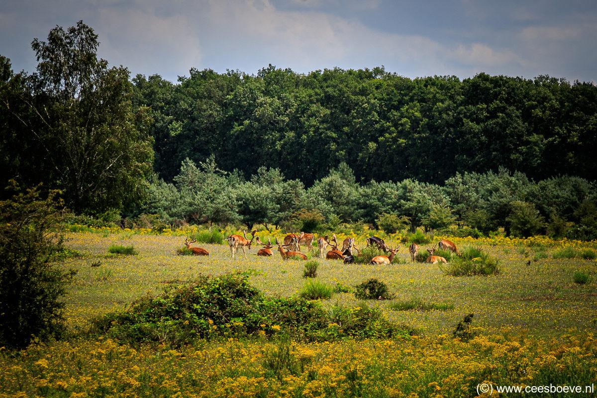 Plantage Willem III | de Utrechtse Heuvelrug, 8 juli 2020