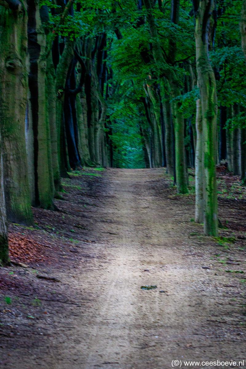 Planken Wambuis | Veluwe | Ede, 9 juli 2020