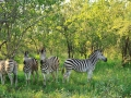 Zebra's | Edeni Private Game Resort