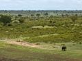 Olifant   Krugerpark, Skukuza, 2012
