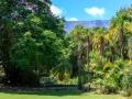 Company Gardens | Kaapstad, Zuid-Afrika, 2 december 2018