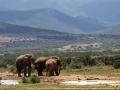 Olifant   Addo Elephant National Park, 13 januari 2011