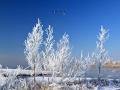 Winter in Nesselande, 4 februari 2012