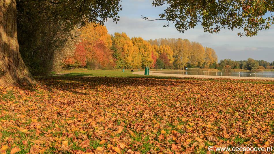 Herfstbeelden Zevenhuizerplas, Nesselande | 30 oktober 2016