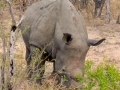 Neushoorn | Karongwe Game Reserve, 19 december 2018