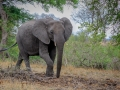 Olifant   Krugerpark, 21 december 2018