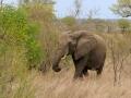 Olifant   Krugerpark, 22 december 2018