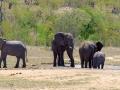 Olifanten    Krugerpark, 22 december 2018