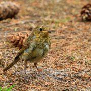 Vogels op Camping de Waps te Oudemirdum