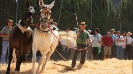 Feria de la Mula