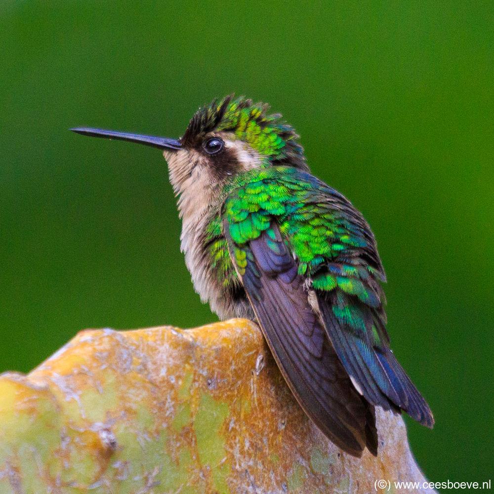 Wildlife van Curacao