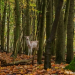 Herfst-Amsterdamse-Waterleidingduinen-3-november-2016